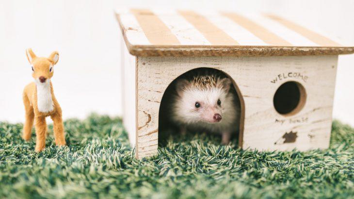 宅配ボックス 戸建ての場合は レンタルが特典付きでお得