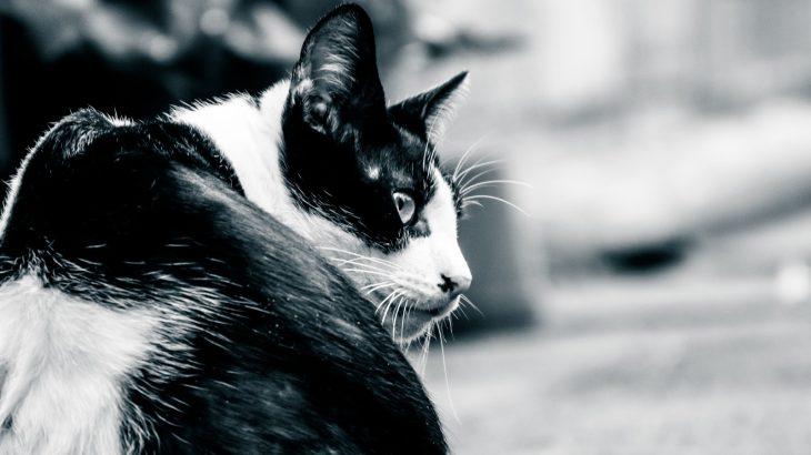 野良猫対策 さらば糞害!猫よけグッズはこれで決まり!