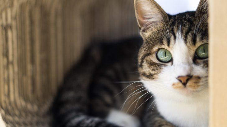 可愛い猫ちゃんの脱走防止扉は オーダーメイドの「にゃんがーど」